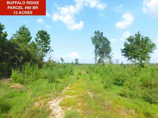 Lot 60 BR Buffalo Ridge Rd, Pace, FL 32571 (MLS #549621) :: Levin Rinke Realty