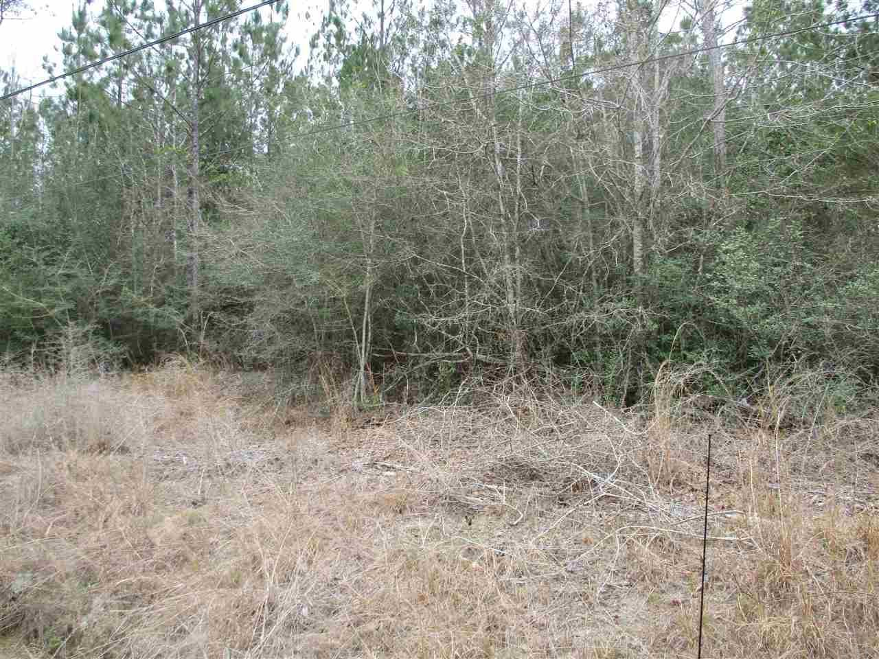 20 Acres Shady Hollow Dr - Photo 1