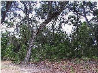 0 Plantation Cove Ct, Milton, FL 32583 (MLS #516348) :: Levin Rinke Realty