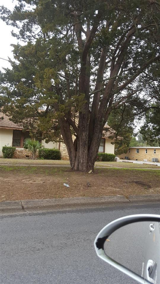 1124 E Yonge St, Pensacola, FL 32503 (MLS #549279) :: ResortQuest Real Estate