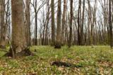 LOT 200 Mossy Trail - Photo 5
