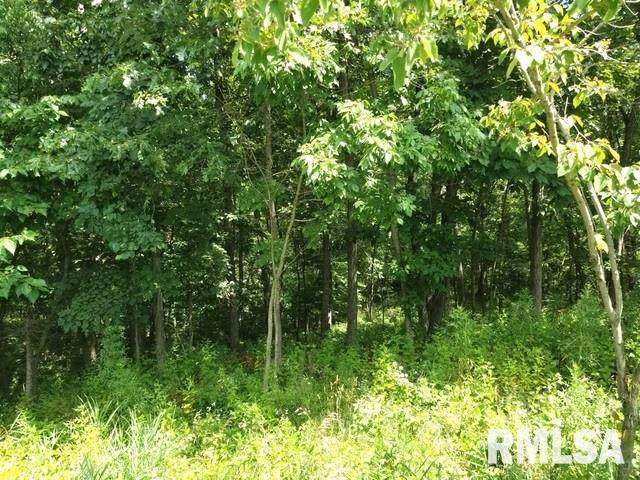 1818 Tanglewood Drive, Varna, IL 61375 (#PA1222922) :: RE/MAX Professionals