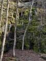 Mountain View Rd - Photo 15