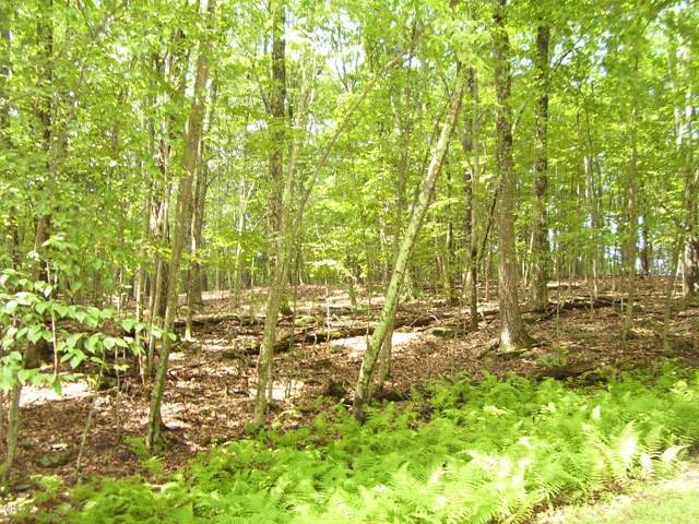 Lot 92 Stone Dr, Hawley, PA 18428 (MLS #18-3616) :: McAteer & Will Estates | Keller Williams Real Estate