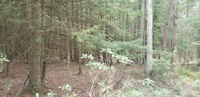 Lot 18 Bear Run Rd, Narrowsburg, NY 12764 (MLS #20-3539) :: McAteer & Will Estates | Keller Williams Real Estate
