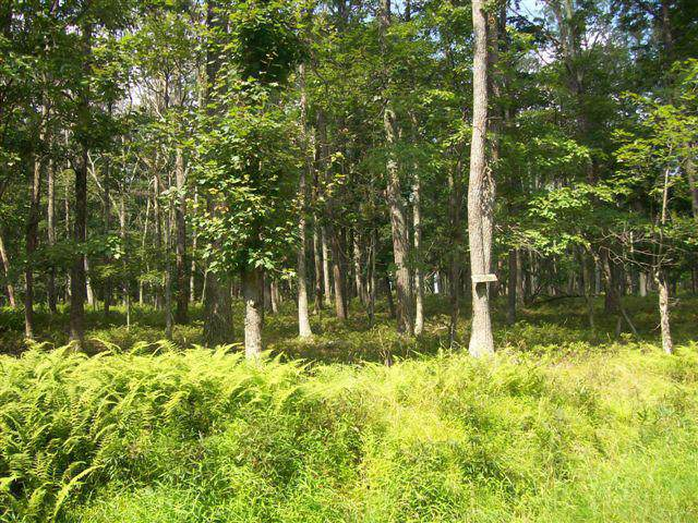LOT 28 Oak Hill Rd, Hawley, PA 18428 (MLS #18-1056) :: McAteer & Will Estates | Keller Williams Real Estate