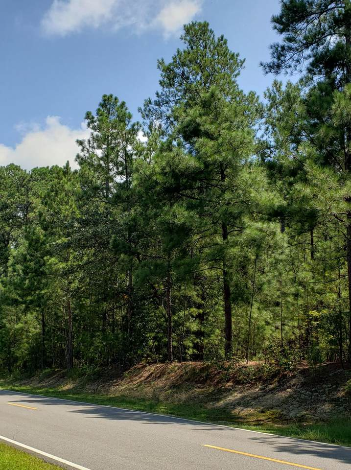Lot 36 Peach Orchard Road - Photo 1