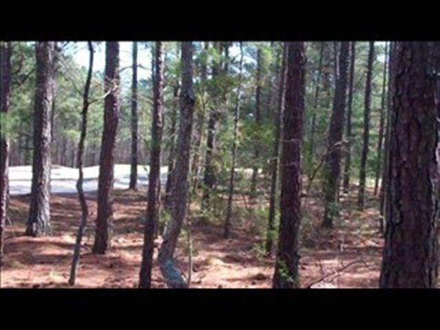 10 Bee Tree Lane, Wagram, NC 28396 (MLS #180888) :: Pinnock Real Estate & Relocation Services, Inc.