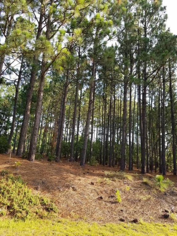107 Berwick, West End, NC 27376 (MLS #183783) :: Pinnock Real Estate & Relocation Services, Inc.
