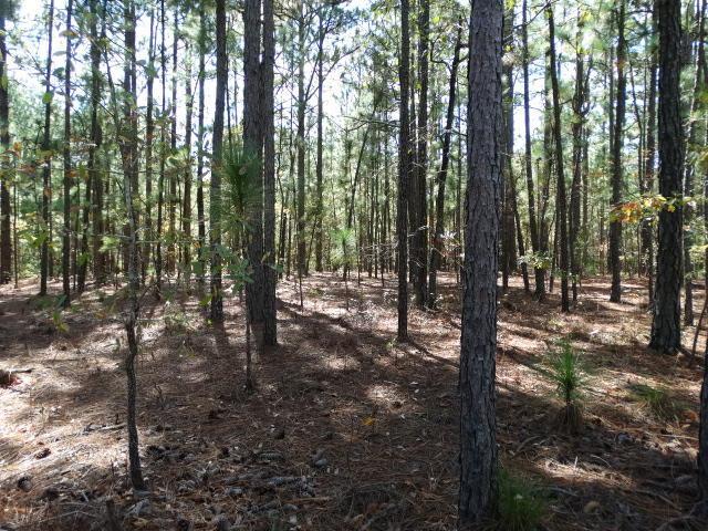 32 Wildlife, Wagram, NC 28396 (MLS #184983) :: Pinnock Real Estate & Relocation Services, Inc.