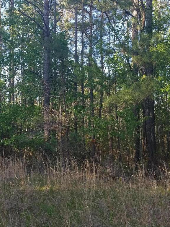 Tbd Gray Woods Road, Marston, NC 28363 (MLS #188100) :: Weichert, Realtors - Town & Country