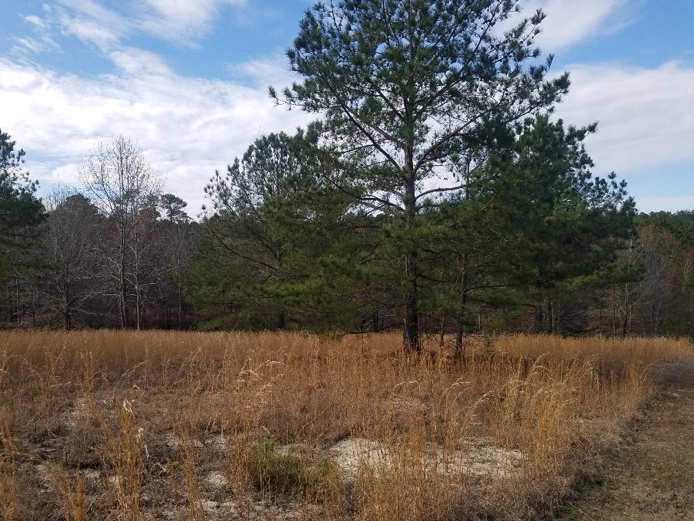 430 Broken Ridge Trail - Photo 1