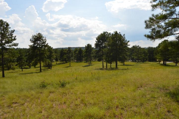 780 Broken Ridge Trail - Photo 1