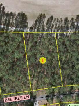 Lot 10 Beetree Lane, Wagram, NC 28396 (MLS #198097) :: Pinnock Real Estate & Relocation Services, Inc.
