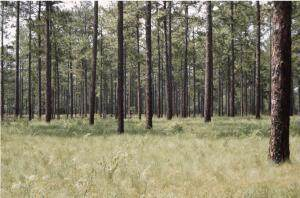 Lot 1 N Fort Bragg Road, Southern Pines, NC 28387 (MLS #208036) :: Pinnock Real Estate & Relocation Services, Inc.