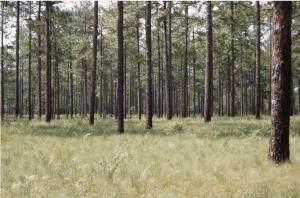 Lot 7 Pixie Moss Lane, Southern Pines, NC 28387 (MLS #208038) :: Towering Pines Real Estate