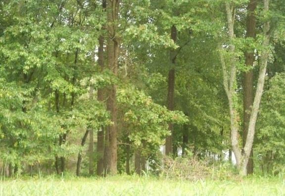 115 W Barons Run, Spring Lake, NC 28390 (MLS #173276) :: Weichert, Realtors - Town & Country