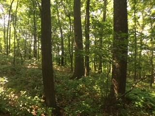 lot/land Nicholson Rd, Franklin Park, PA 15143 (MLS #1349614) :: Keller Williams Pittsburgh