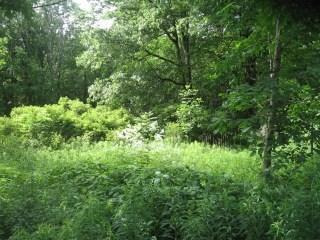 Lot 250 Oak Way, Wilmington Twp, PA 16142 (MLS #1410855) :: Dave Tumpa Team