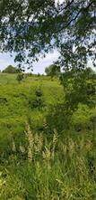 Lot 202 Pfeifer Rd (Creekwood Fields) - Photo 1
