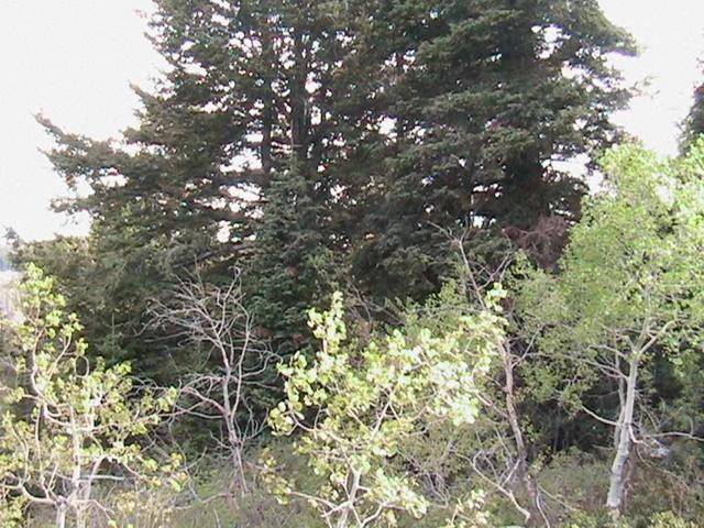 0000 Wolverine, Firth, ID 83236 (MLS #562701) :: The Perfect Home