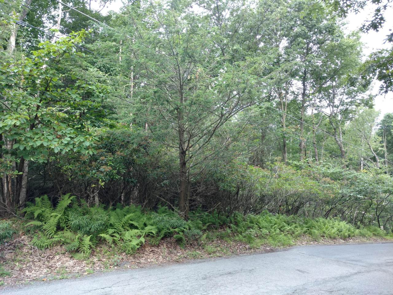 404 Pine Tree Drive - Photo 1