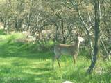 FP1151 Mattawa Trail - Photo 1