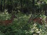 D2019 Penn Forest Trl - Photo 1