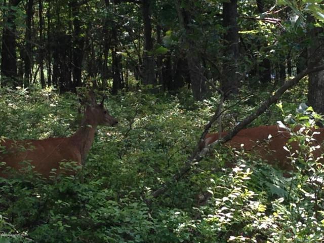 B3.01 Forest Dr, Jim Thorpe, PA 18229 (MLS #PM-60722) :: Keller Williams Real Estate