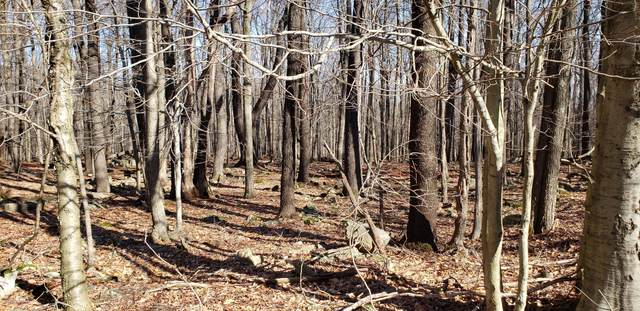 LOT 1A Stillwater Dr, Newfoundland, PA 18445 (MLS #PM-76253) :: RE/MAX of the Poconos