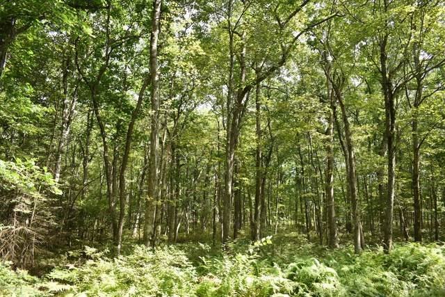 Lot A519 Willowbrook Lane, Jim Thorpe, PA 18229 (MLS #PM-80767) :: Kelly Realty Group
