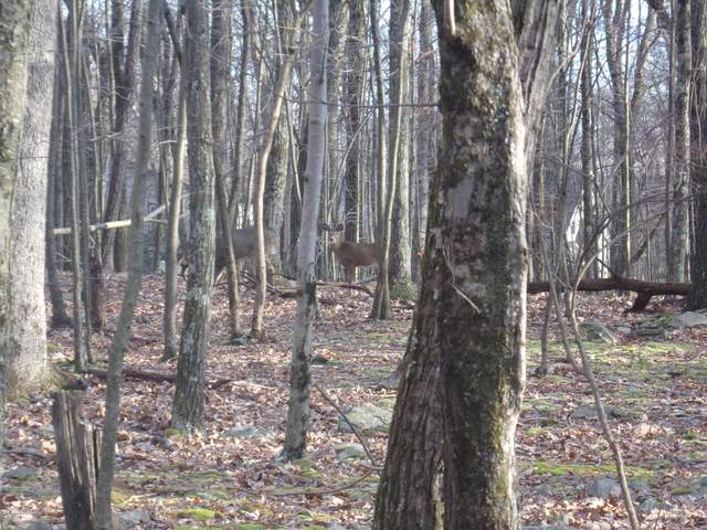Lot 325 W. Chipmunk, Bushkill, PA 18324 (MLS #PM-83264) :: Keller Williams Real Estate