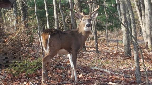 463 T Jackson Rd, Stroudsburg, PA 18360 (MLS #PM-64746) :: RE/MAX of the Poconos