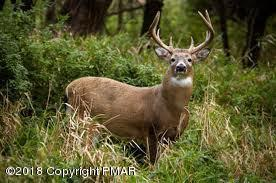 344 Hawthorne Dr., Thornhurst, PA 18424 (MLS #PM-55814) :: RE/MAX of the Poconos