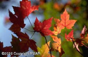 87 Kent Clarke Rd, Lake Harmony, PA 18624 (MLS #PM-77931) :: Kelly Realty Group