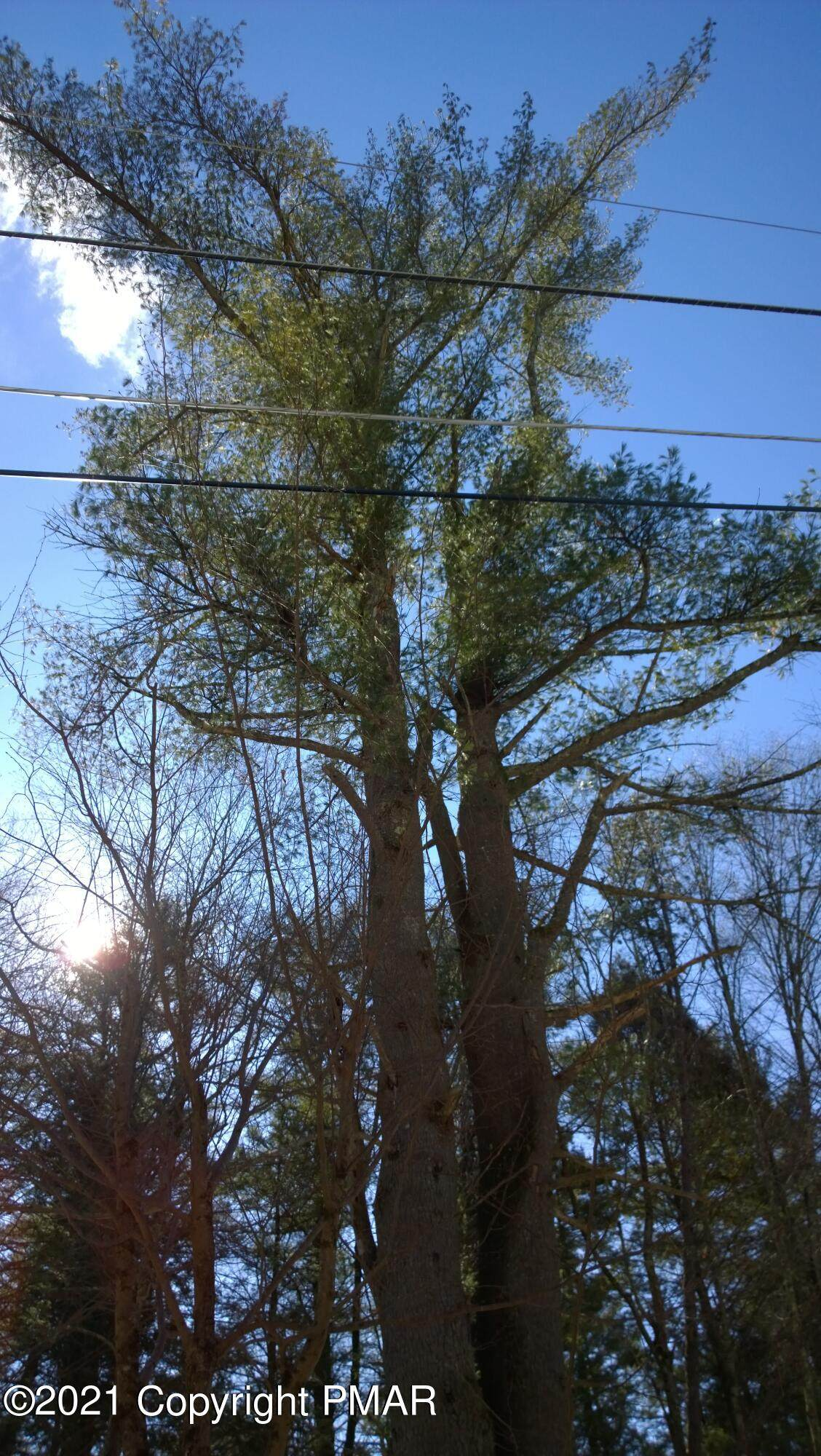 Lot 675 Raccoon Ct - Photo 1