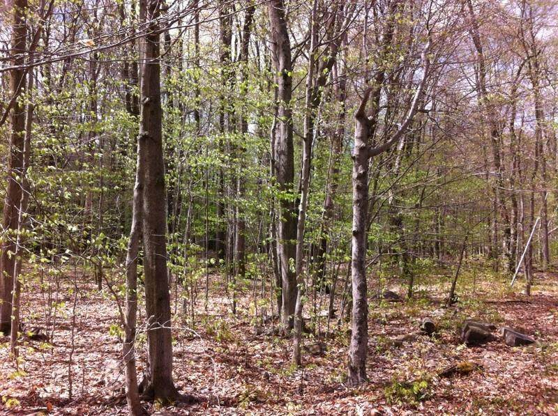 1001 Ranger Trail Trl - Photo 1