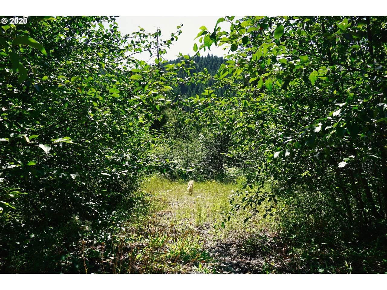 Bear Creek Lot 2,3 - Photo 1