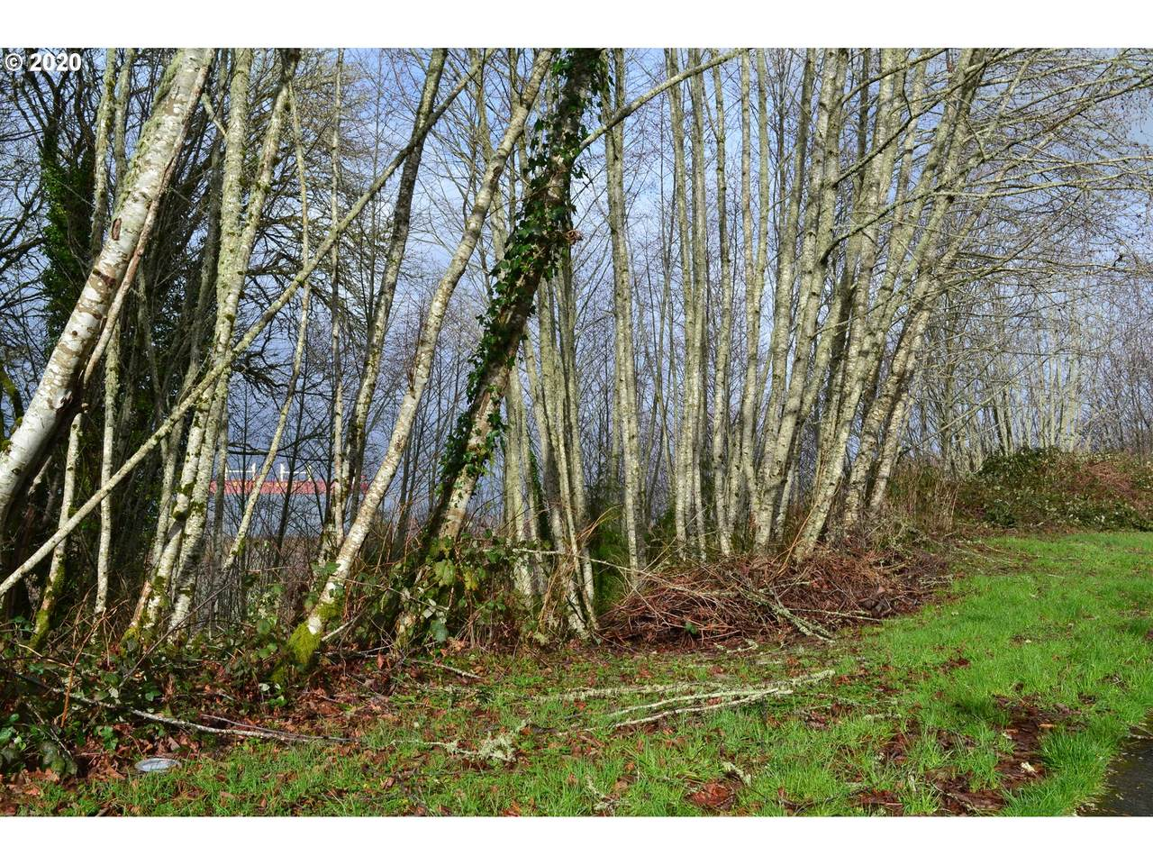 5460 Old Columbia River Hwy - Photo 1