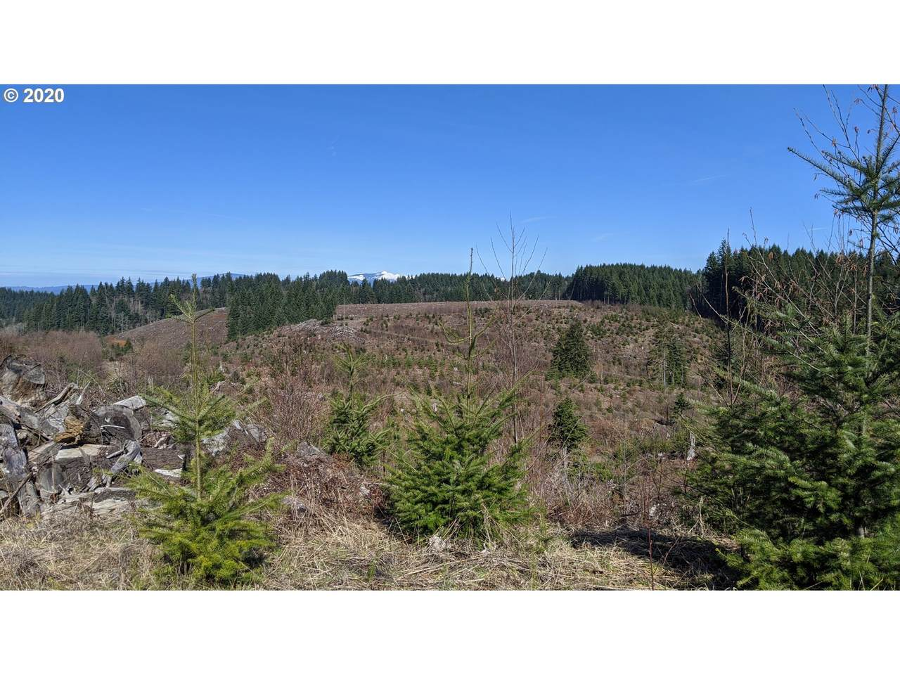 Haines Rd - Photo 1