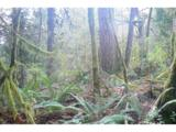 0 Old Pup Creek Rd - Photo 13
