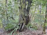 0 Bobcat Dr - Photo 16