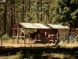 599 Turkey Ranch Rd - Photo 15