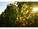 9405 Farmer Rd - Photo 3