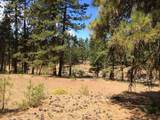 Pine Forest - Photo 1