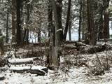 Pine Forest - Photo 11