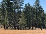 Leaning Pine - Photo 2
