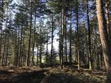 Mountain Rd - Photo 1