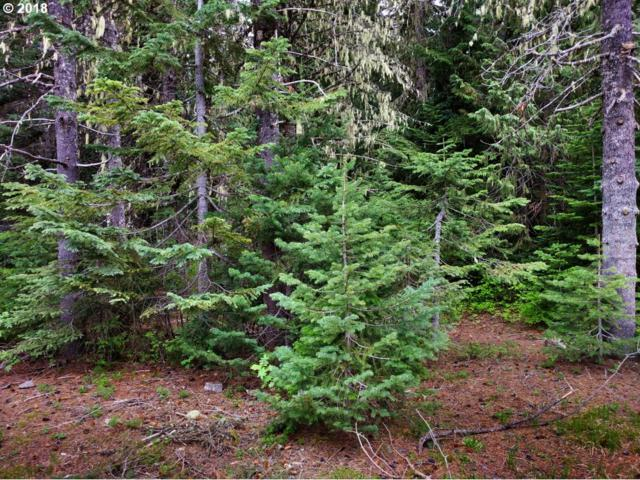 Blossom Trail, Government Camp, OR 97028 (MLS #18295286) :: Realty Edge