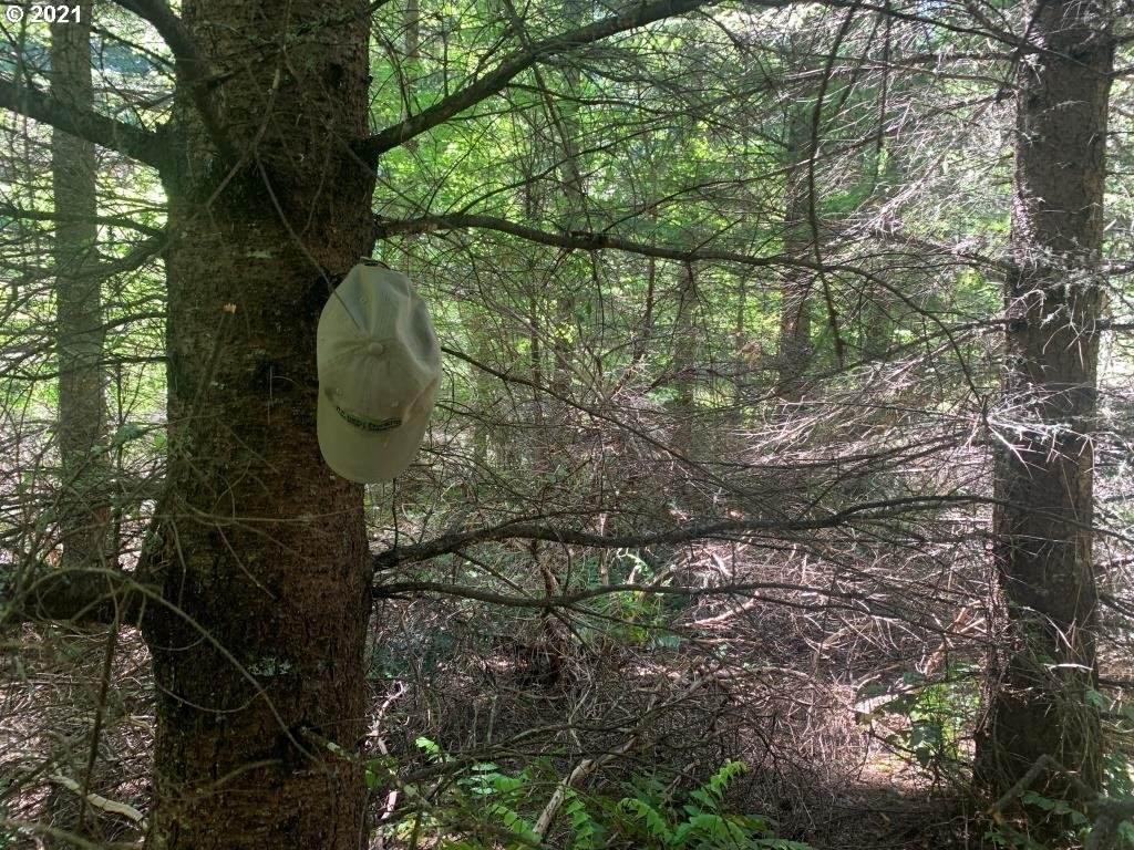 0 Culp Ck Forest Rd - Photo 1